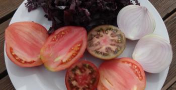 Sauce tomate à la dulse