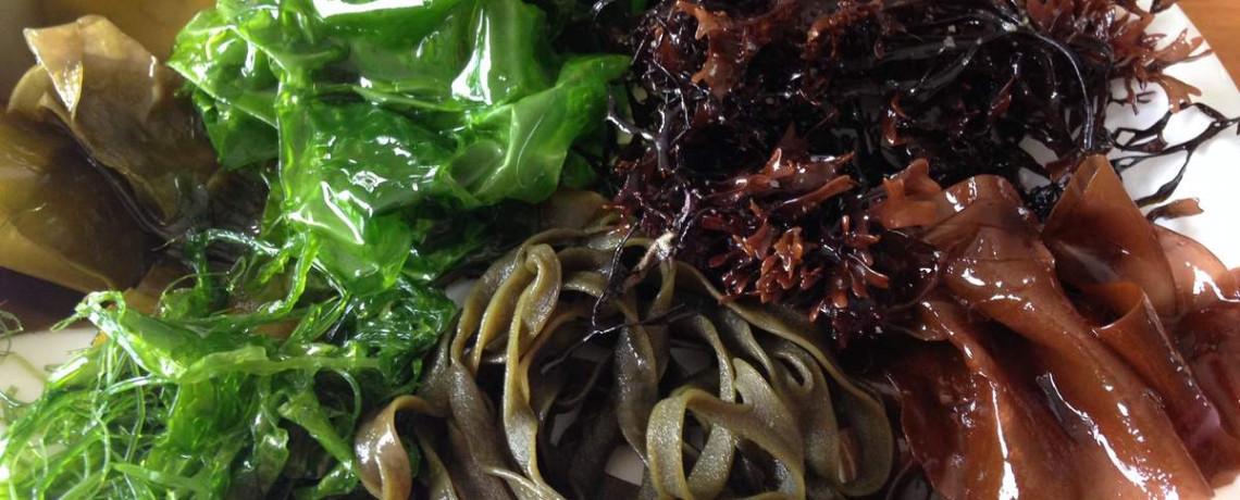 Les algues, font-elles maigrir ?