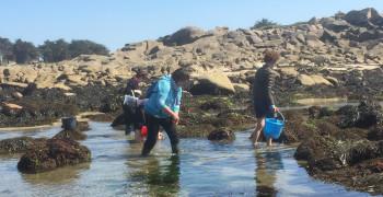 Formation pour animer un atelier algues