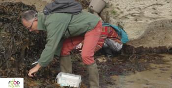 Savez-vous reconnaître les algues?  Episode 2