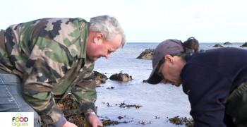 Pour l'amour des algues! -  Episode 1