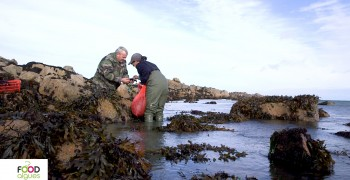Pour l'amour des algues! -  Episode 2