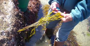 Qu'est-ce qu'une algue ?