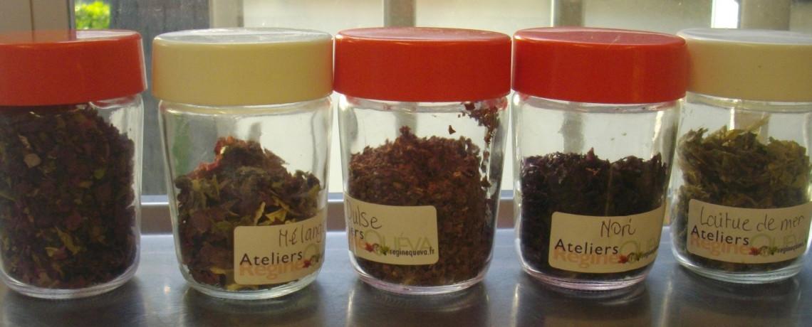 PREMIERS PAS : Quelles algues cuisiner ?